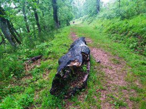 peligros rayos camino lebaniego