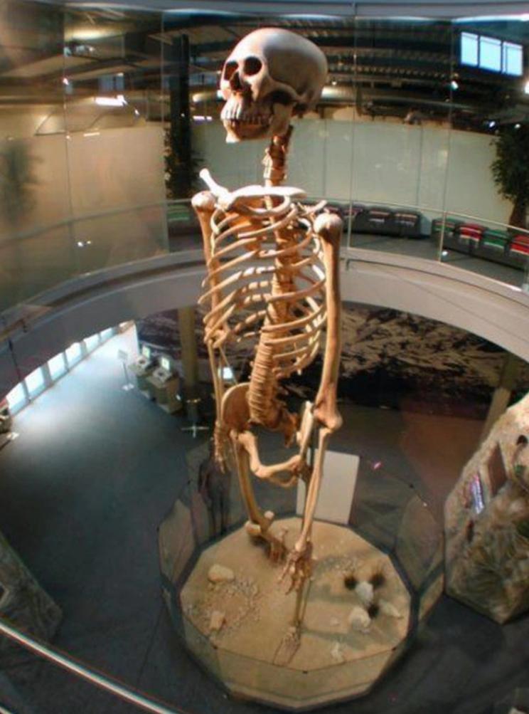 Esqueleto reconstruido con los huesos encontrados en Ecuador que se exhiben en el Parque Jungfrau de Suiza.