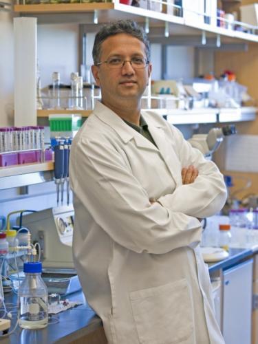 El doctor Shuvo Roy, bio-ingeniero y profesor de la Universidad de California, San Francisco, UCSF/Foto de la Universidad de California